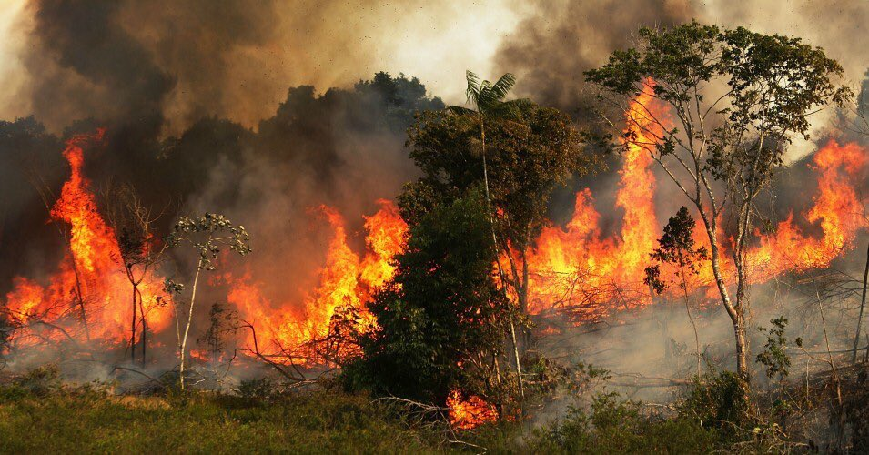 The Amazon Rainforest In Brazil Is On Fire