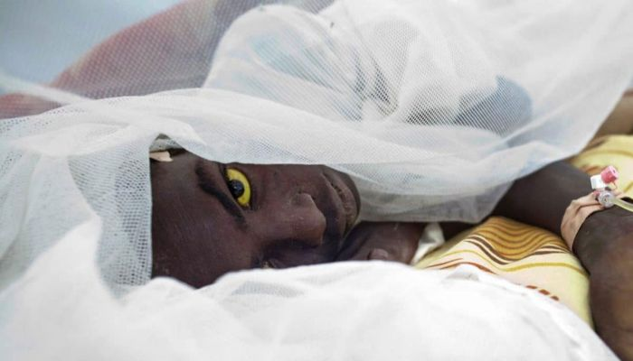 Yellow Fever Takes The Lives Of 10 Persons In Bauchi
