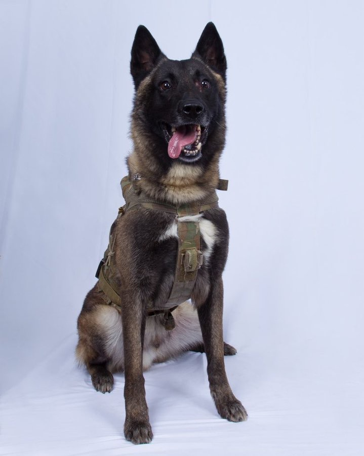 President Trump Reveals Photo Of Military Dog That Chased ISIS Leader, al-Baghdadi Into A Tunnel 3