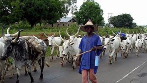 Herdsman Rapes 56-Year-Old Ebonyi Woman To Death