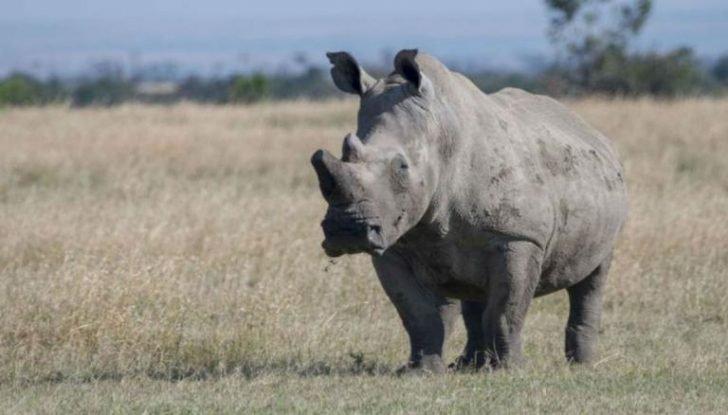 World's Oldest Black Rhinoceros Dies Aged 57 (Photos)