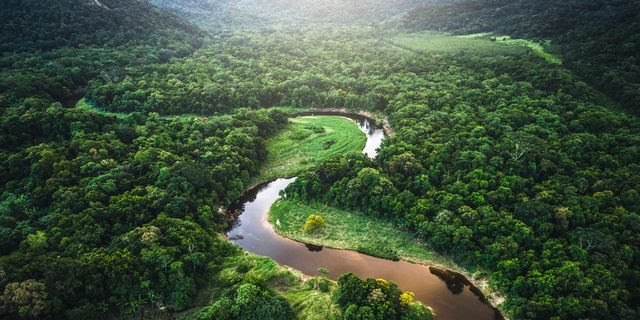 Amazon Rainforest: How Well Do You Know The Densest Jungle In The World?