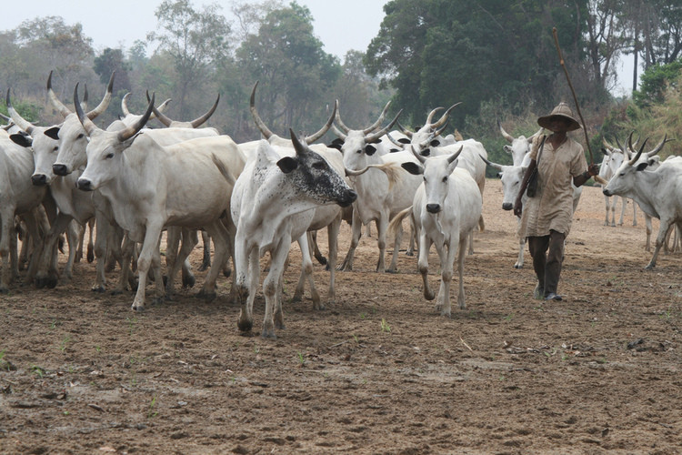 Delta Community Places BAN On Sale And Consumption Of Beef Over Herdsmen Killing