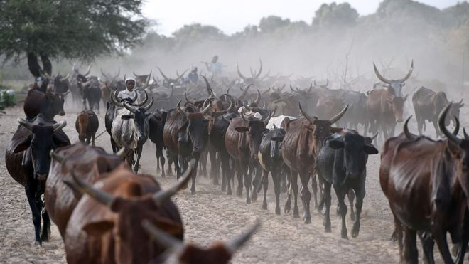 Chad Is 'Repaying $100m Debt To Angola With Cattle'