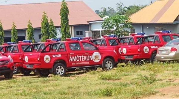 Amotekun 'Arrests' 42 Cows For Damaging Farmlands In Ondo