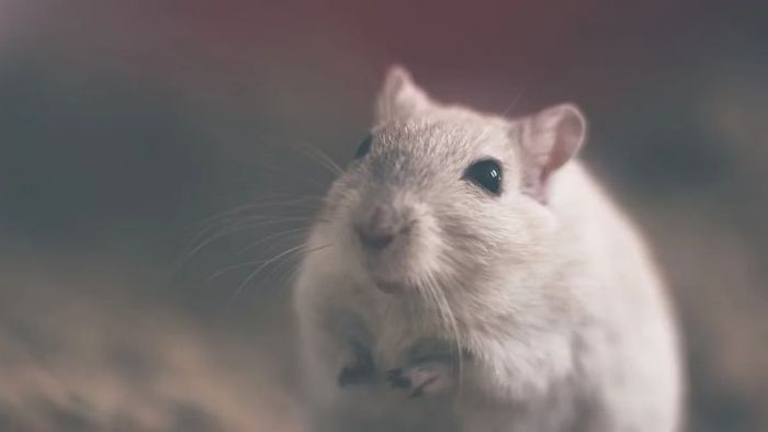 OMG! Man Dies, 32 Others Infected With New Hantavirus In China