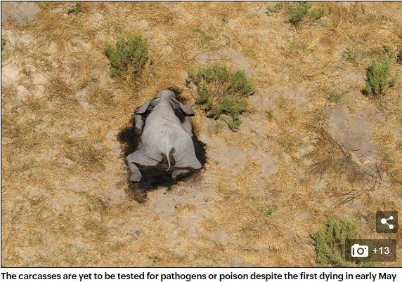 Over 350 Elephants Die Mysteriously In Bostwana (Photos)